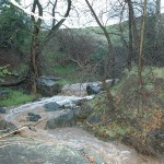 SAN-JOSE-BERRYESSA-CREEK06